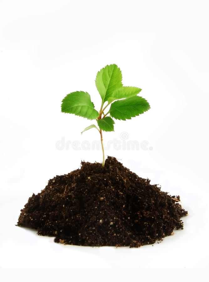 New life. Small plant in land like a new life on the white background stock photos