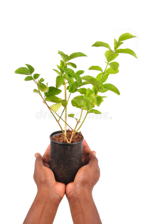 New life. Plant growing from steel can, hand holding steel can plant stock photo