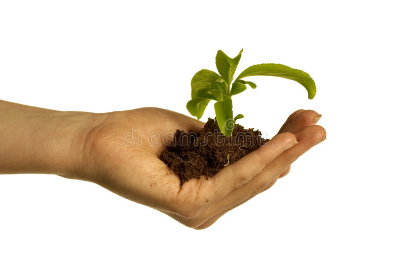 New life. Hand holding dirt and plant royalty free stock image