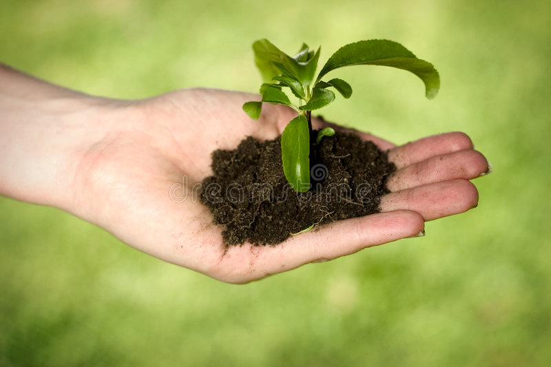 New life. Hand holding dirt and plant royalty free stock photography