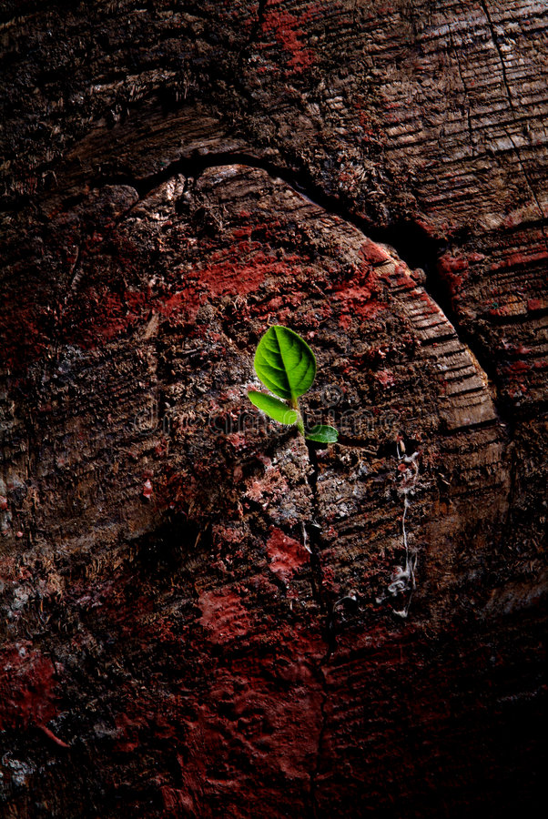 New life. Small plant growing from a dry and dead wood stock photography