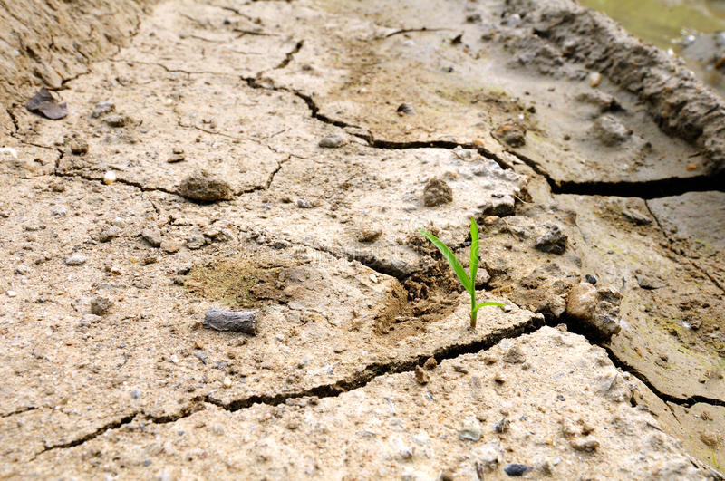 A new life. The new life and dry ground stock photography