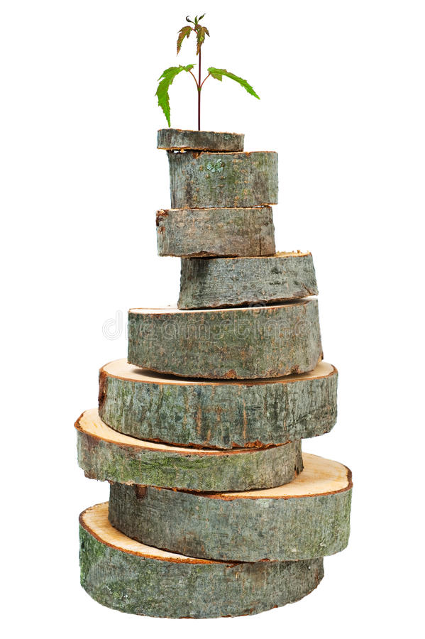 New life. Stacked pyramid from wooden cross sections on white background stock images