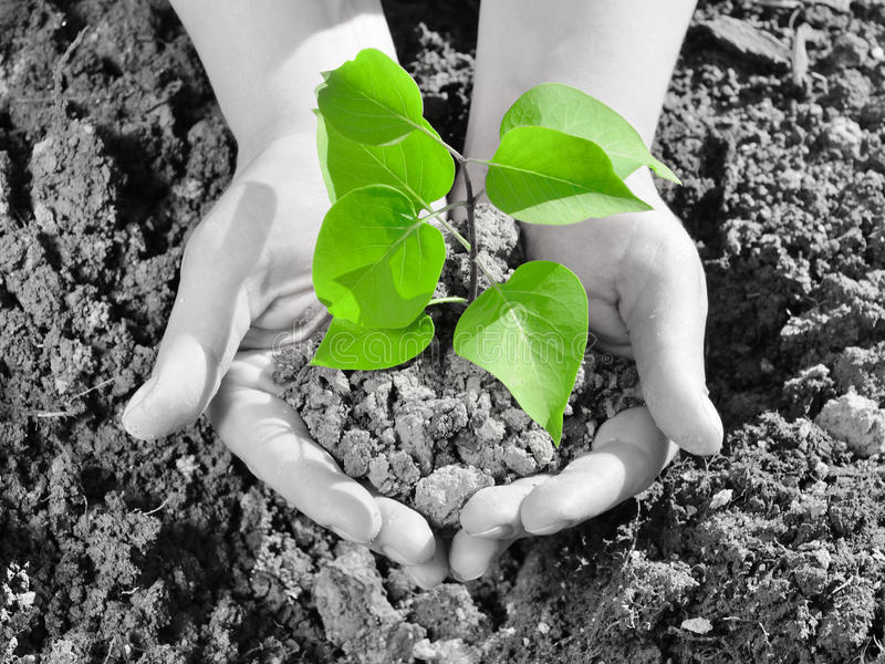 New life. Green small plant in the human hand royalty free stock image