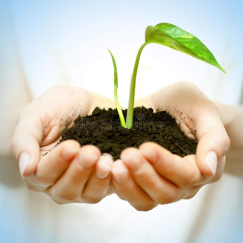New life. Human hands holding green small plant new life concept royalty free stock photos