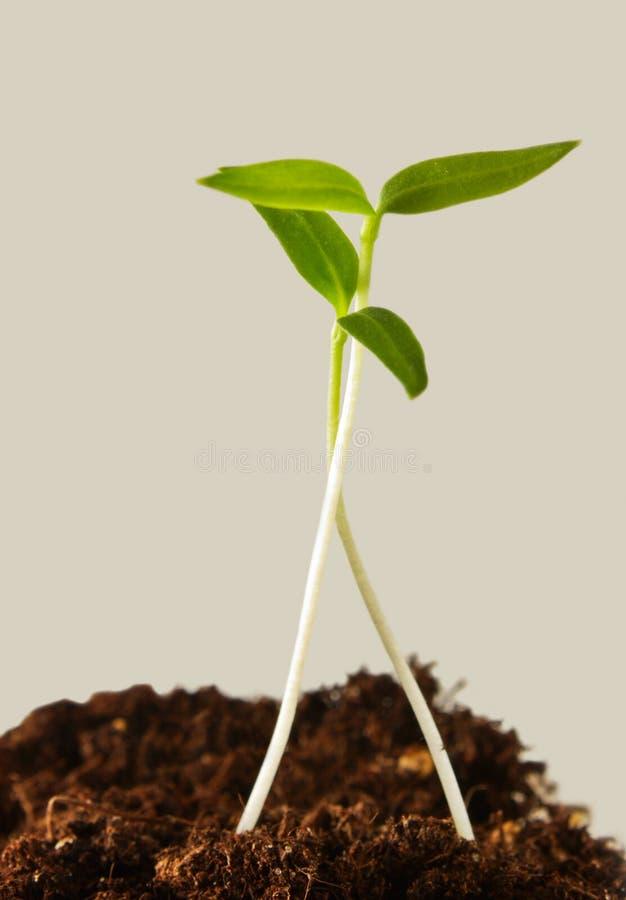Download New life stock image. Image of dirt, nature, progress - 28804615