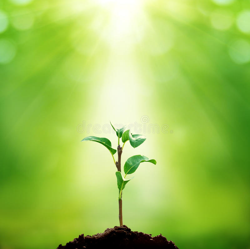 New life. Growing green plant on green background stock photo