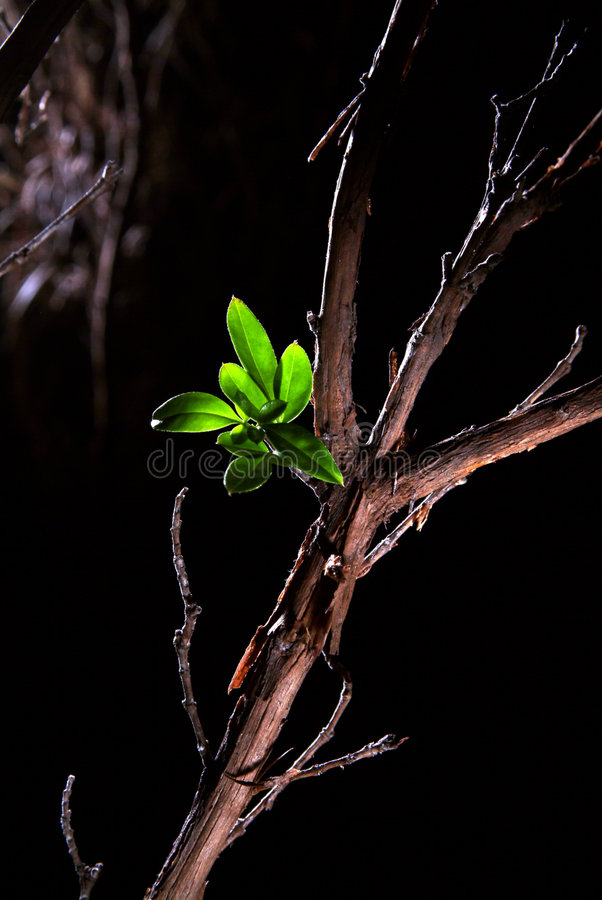 New life. Small plant growing from a dry and dead wood royalty free stock image