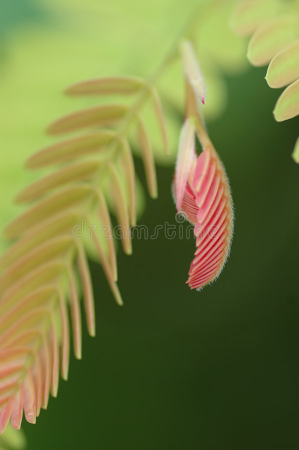 New life. Young shoot of tropical plant royalty free stock photography