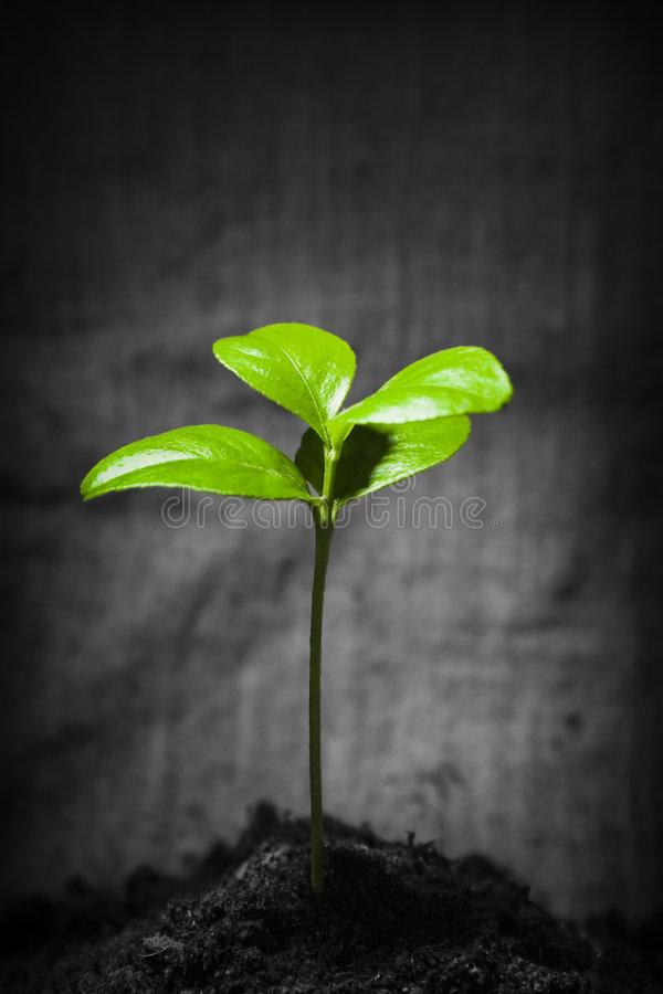New life. Green lush small plant over dark rural background stock images