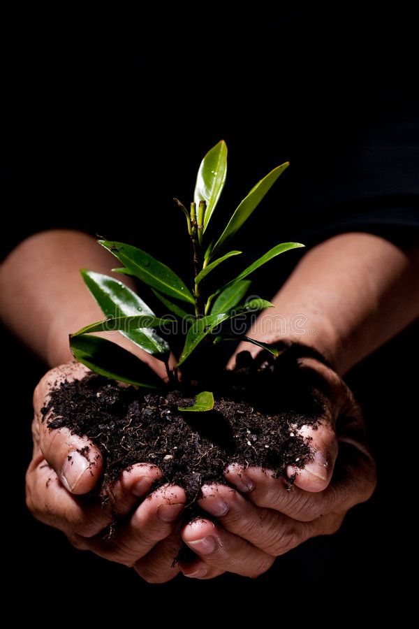 New life. A shot of hands holding a new plant, symbolizes new life and save the tree concept royalty free stock images
