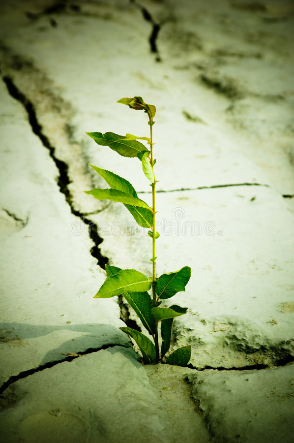 New life. Green plant growing from cracked earth royalty free stock photos