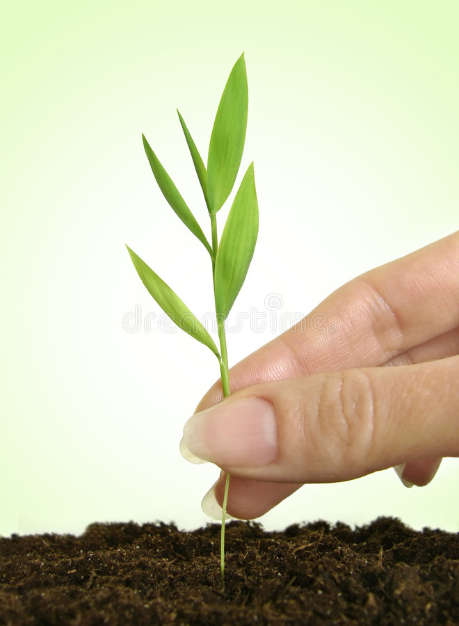 New life. Close-up of female hand planting a seedling in soil royalty free stock image