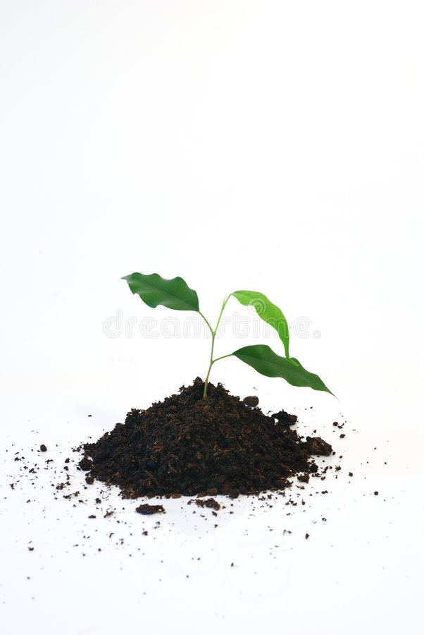 New life. Three young green leaf on white background stock images