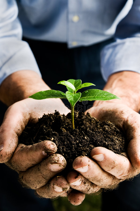 New life. Farmer hand holding a fresh young plant. Symbol of new life and environmental conservation. Space for text stock photo