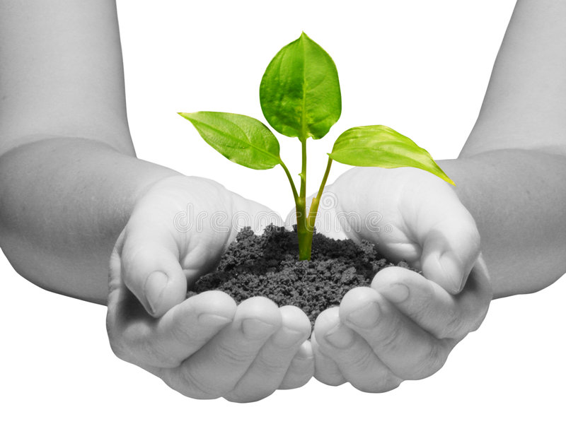 New life. Hands holding sapling in soil on white royalty free stock photo