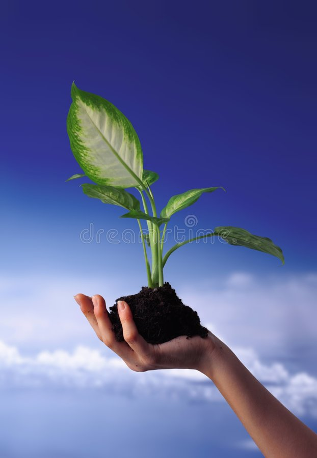 New life. Concept of the growth and new life: woman holding a small plant in hand royalty free stock photo