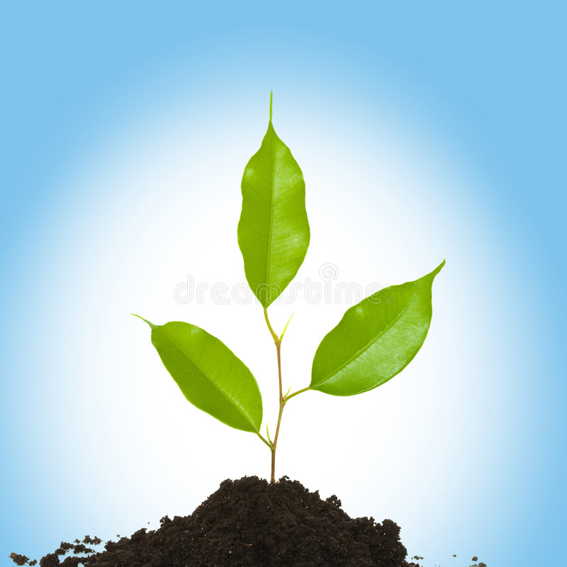 Download New life stock photo. Image of nature, growth, ground - 8746832