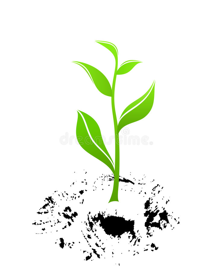 Download New life stock vector. Image of sprout, dirt, nature, soil - 8957153