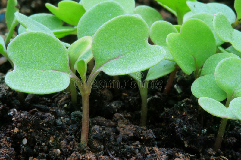 New life. Green seedling illustrating new life stock images
