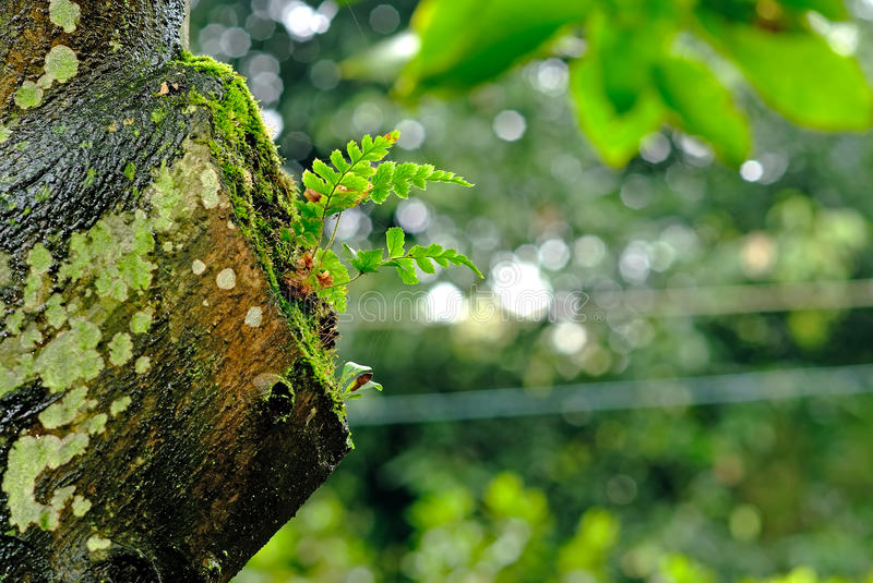The new life on a broken tree. A grass tenacious growing on a broken tree stock images