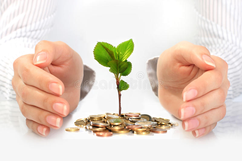 New life. Business concept. Small plant, coins and hands. Business conceptual image royalty free stock image