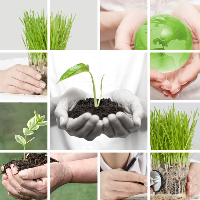 New life collage. By human hands take care about nature royalty free stock image