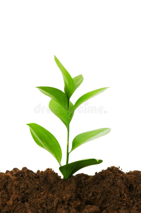 New life concept. Green seedling growing out of soil stock images
