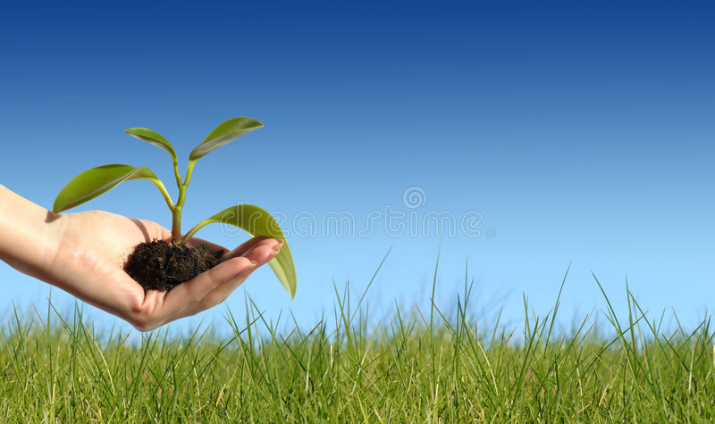 Download New life concept stock photo. Image of grow, life, nature - 3472436