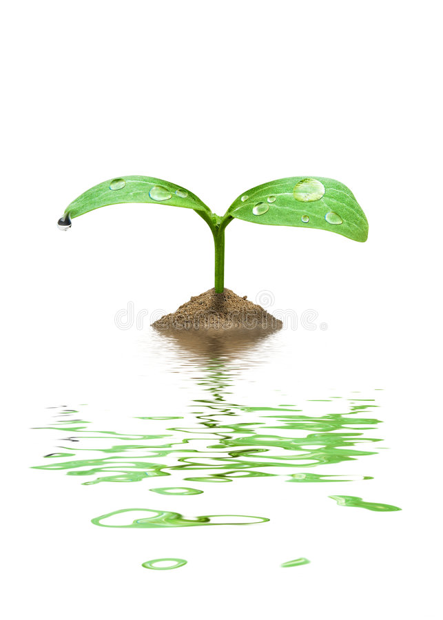 New life concept. The new life concept. Plant in water royalty free stock photos