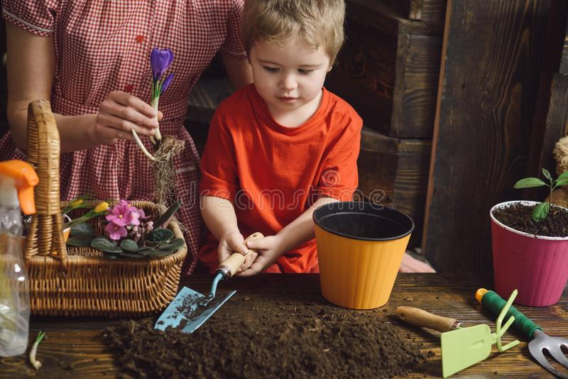New life concept. Little child plant spring flower in soil, new life. Beginning of new life. Care of new life royalty free stock photos