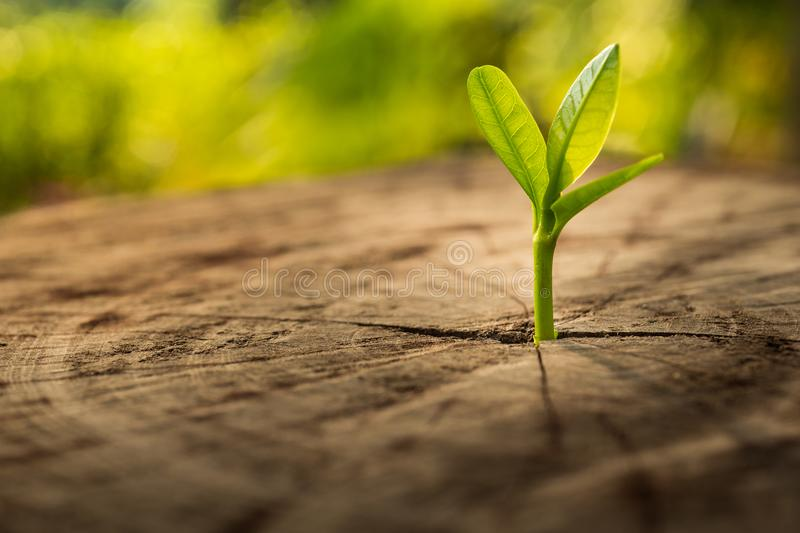 New Life concept with seedling growing sprout tree. Business development symbolic royalty free stock image