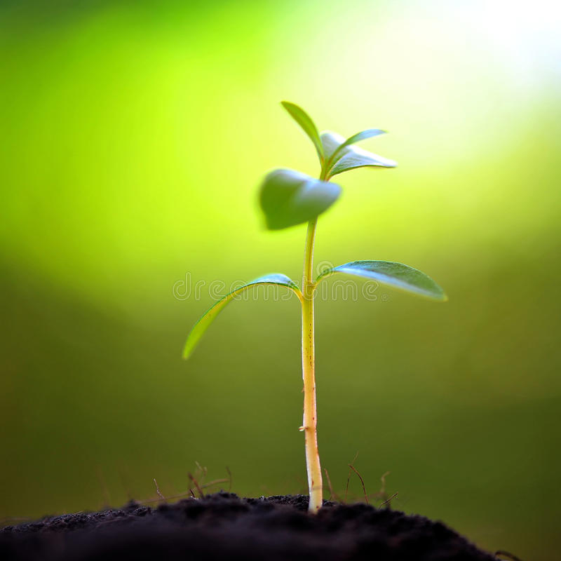 New Life. On Green Background royalty free stock photos