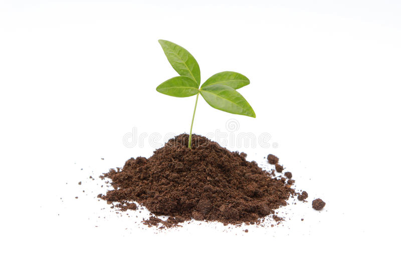 New life. Green sprout growing from soil stock photo