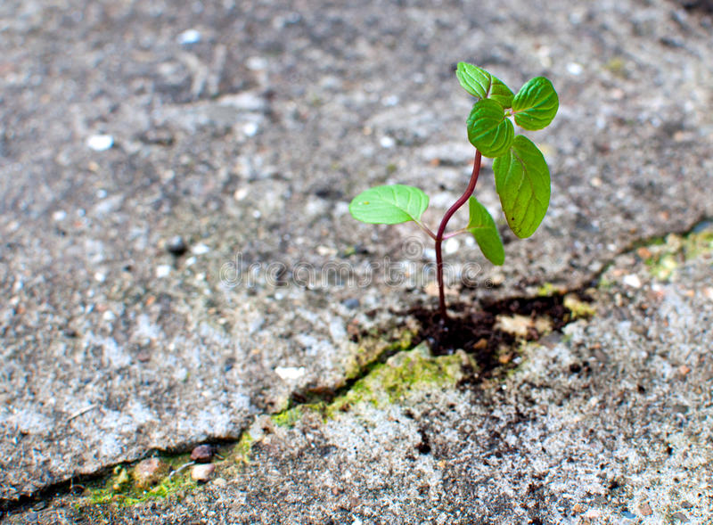 Image result for seedling cement