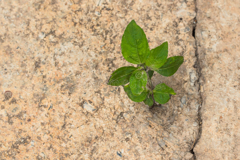 New life growing in concrete. New life growing on concrete stock photography