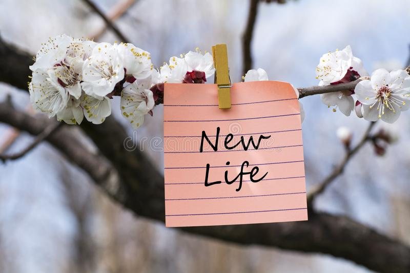 New life in memo. Pined on tree with blooms stock images
