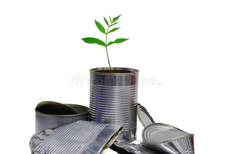 New life from old rubbish. A young plant growing from a pile of tin cans
