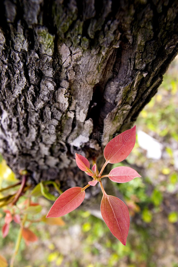 Download New life on old tree stock photo. Image of green, color - 14063094