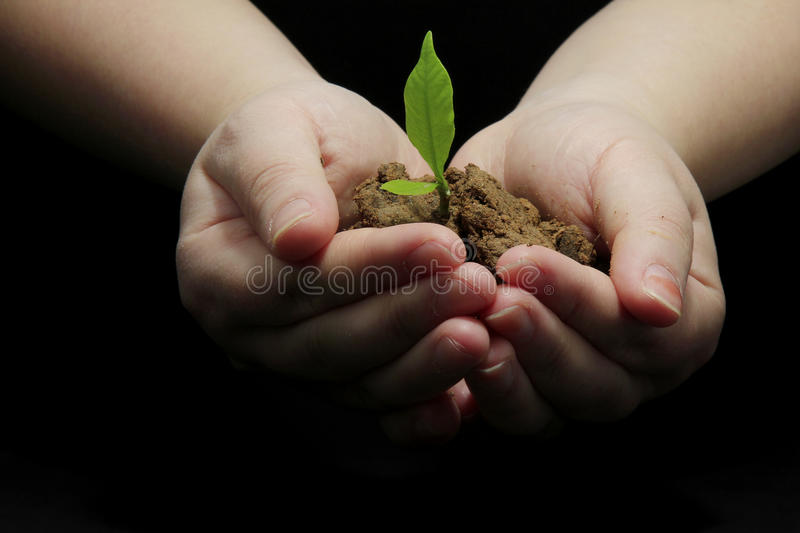 New life. A pair of hands holding a fresh young plant. Symbol of new life and environmental conservation royalty free stock photography