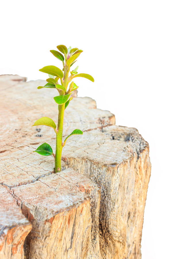 Free New Life Seedlings On Stump Royalty Free Stock Photos - 55662088