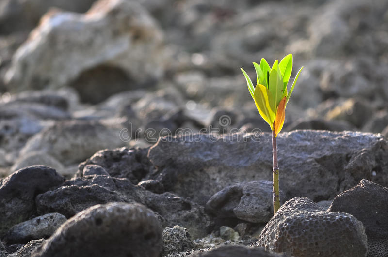 New life. Small green plant growing up on stones royalty free stock images