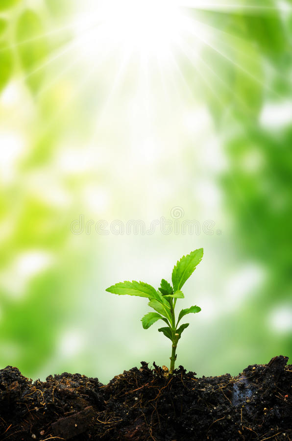 New life small tree and sunshine stock photo