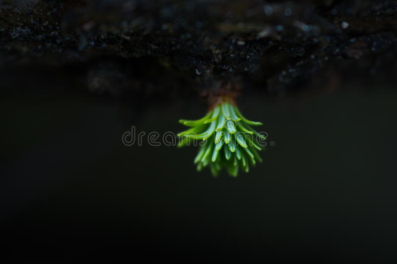 New life in the spring. New life coming out of a tree royalty free stock images