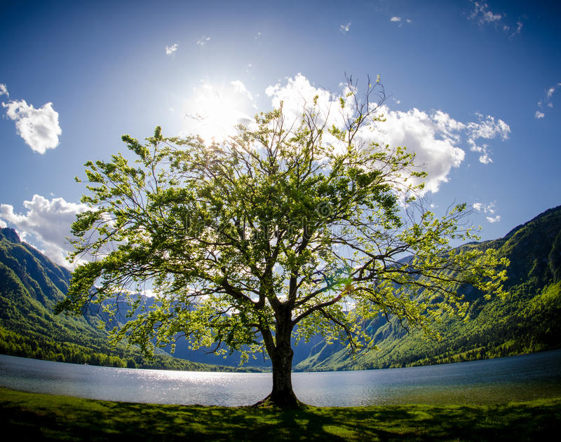New life. Tree and mountains stock photography