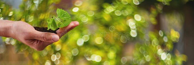 New Life Young Plant i Sunlight, Odling, Seedling arkivfoto
