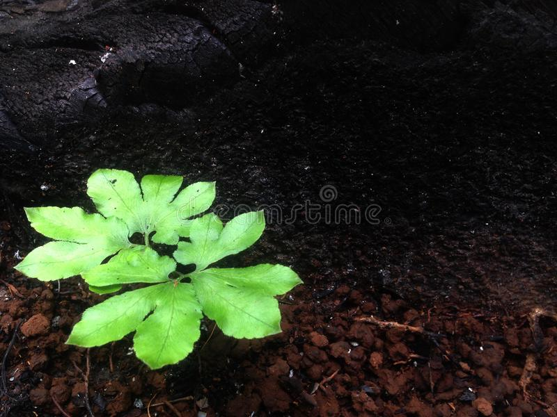 New Life Young Plant in Sunlight, Growing Plant royalty free stock photo