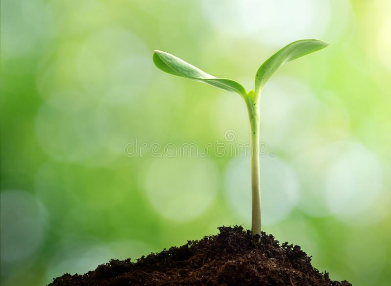 New life. Young sprout in springtime. Earth day concept. stock photo
