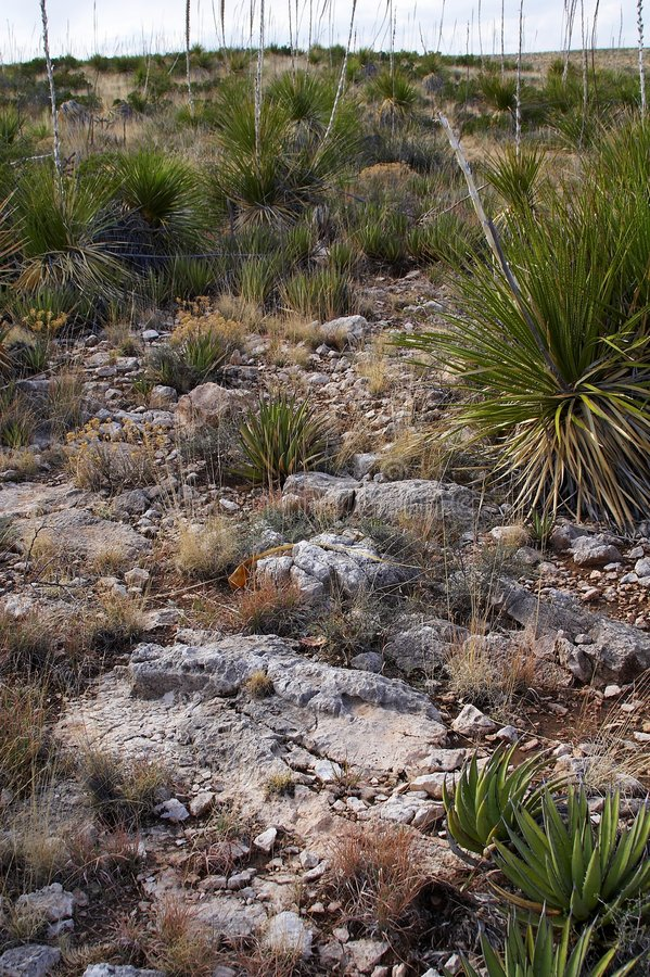 New Mexico. Travel in US - Sceneries of New Mexico royalty free stock images