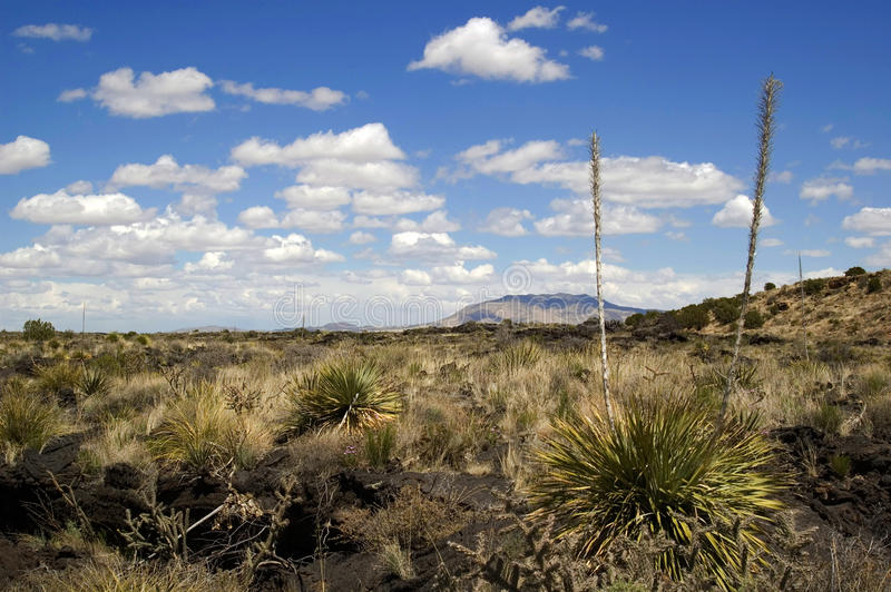 New Mexico desert. Panoramic view of New Mexico desert. Sunlight and clouds. USA stock photography
